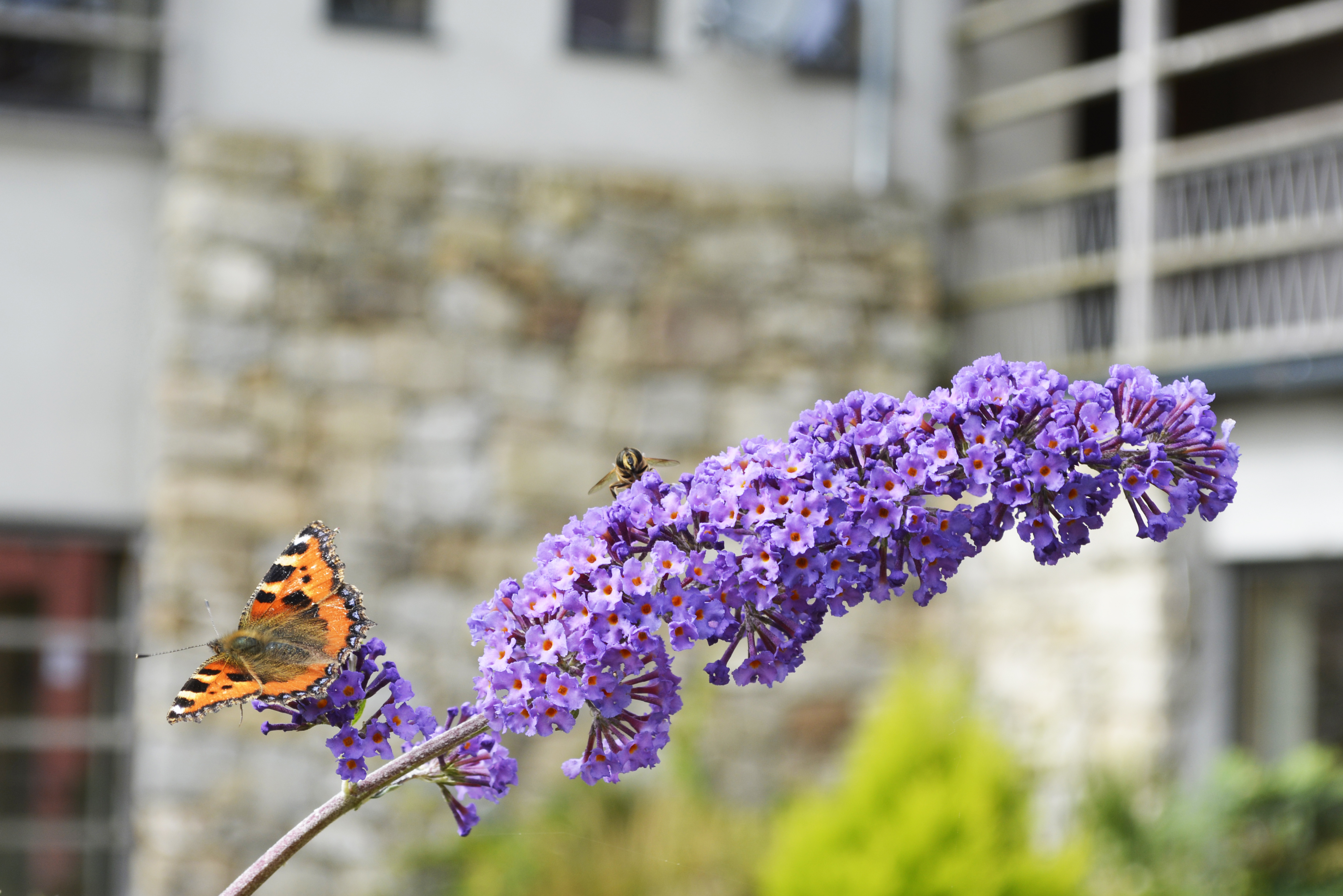 knockree butterfly and bee on flower