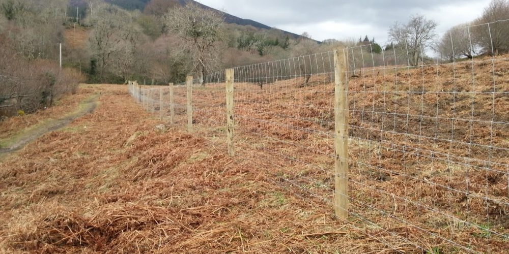 Deer Fence at Knockree